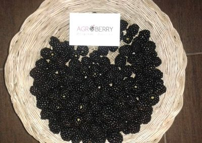 agroberry_producto_05