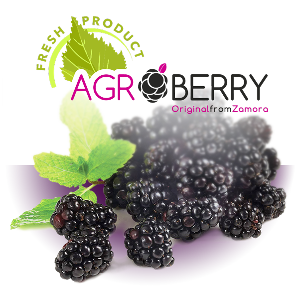 Fresh Agroberry blackberry